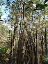 Photo: Decayed cypress trunk
