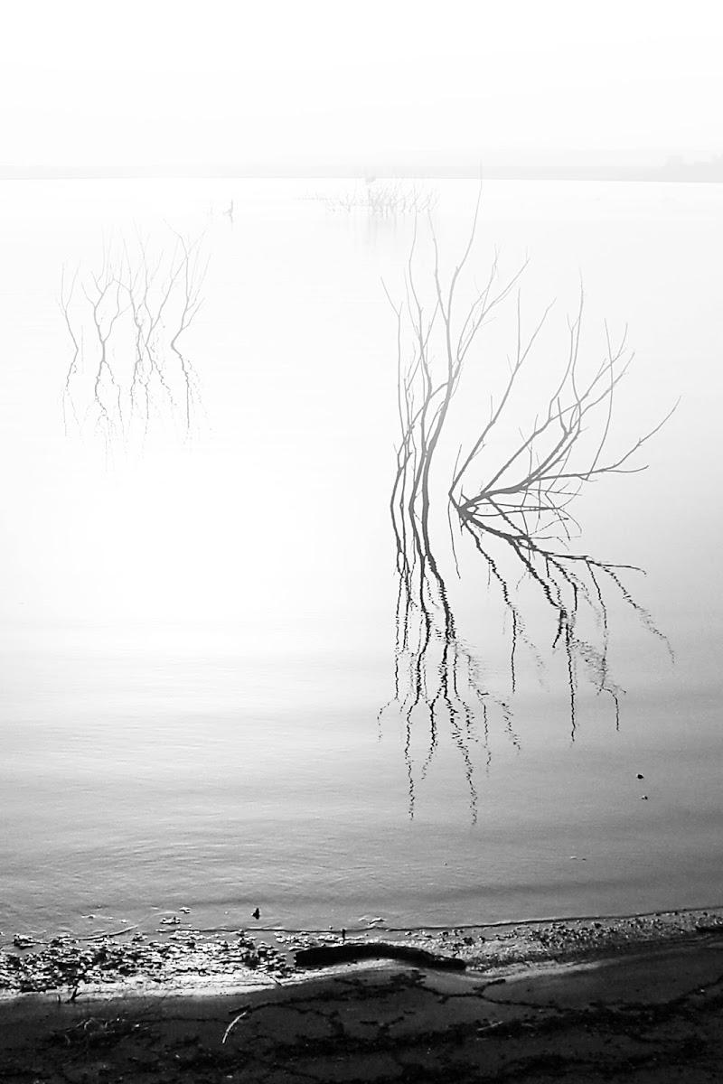 Fog di adrianocasciofotografie