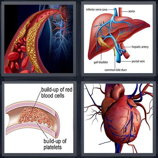 Blood Disease & Treatment