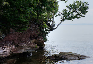 Photo: Some trees are undermined by the erosion and hang on for dear life.