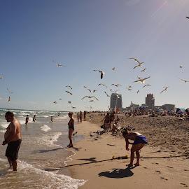 South BEach by Carlito Rivera - Landscapes Beaches ( miami, beach, people, birds, south beach,  )