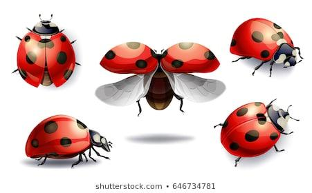 https://image.shutterstock.com/image-vector/set-red-ladybug-isolated-on-260nw-646734781.jpg