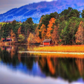 Autumn by Jan Helge - Landscapes Forests ( water, autumn, forest, yellow, norway,  )
