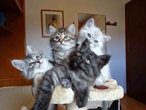 Photo: Shiva, Segovax, Salem y Sian
