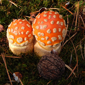 Reaching to wards the light by Catherine Klippenstein - Nature Up Close Mushrooms & Fungi