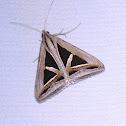 Triangle Moth