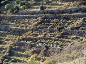 Photo: The ground is filled with a lot of stones.  They used them to build miles of terrace walls for their lavendar plots.