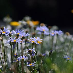 Blue Garden by Jadranka Bužimkić - Nature Up Close Flowers - 2011-2013