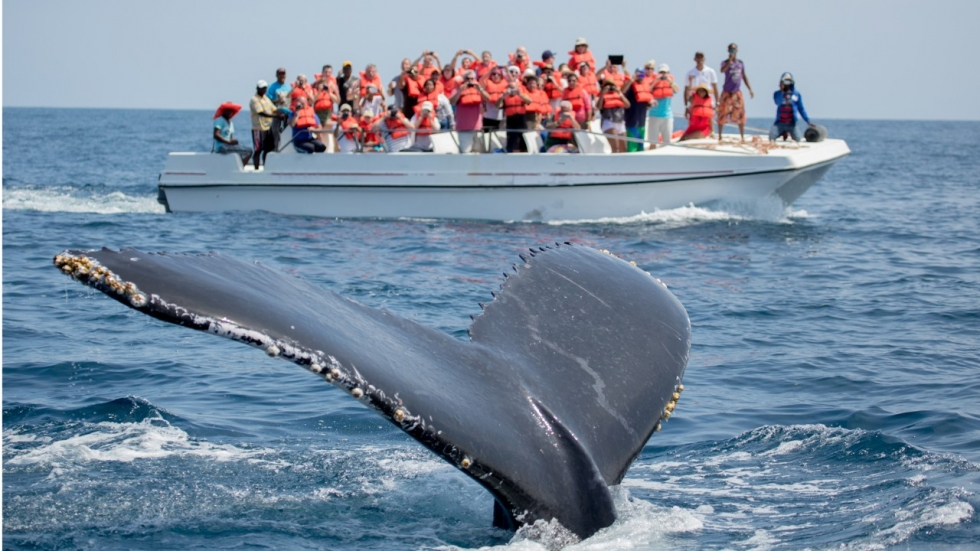 The Potential of Whale Watching as an Educational Exercise