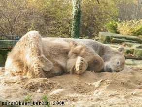Photo: Knut im Land der Traeume ;-)