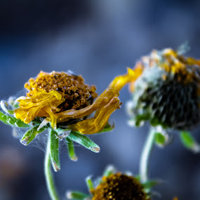 Webs by Kyle Blakeburn - Flowers Flowers in the Wild ( green, yellow, yellow flower, webs, wild )