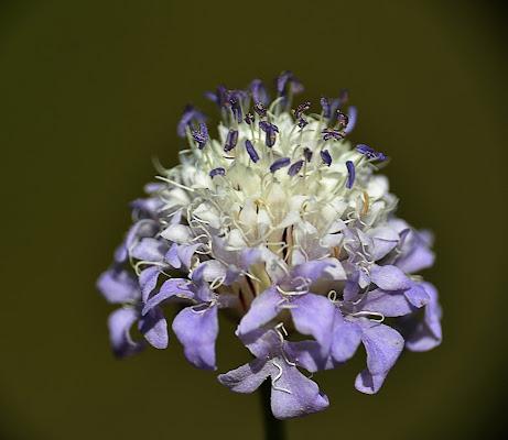 Fiore viola di Pablophoto
