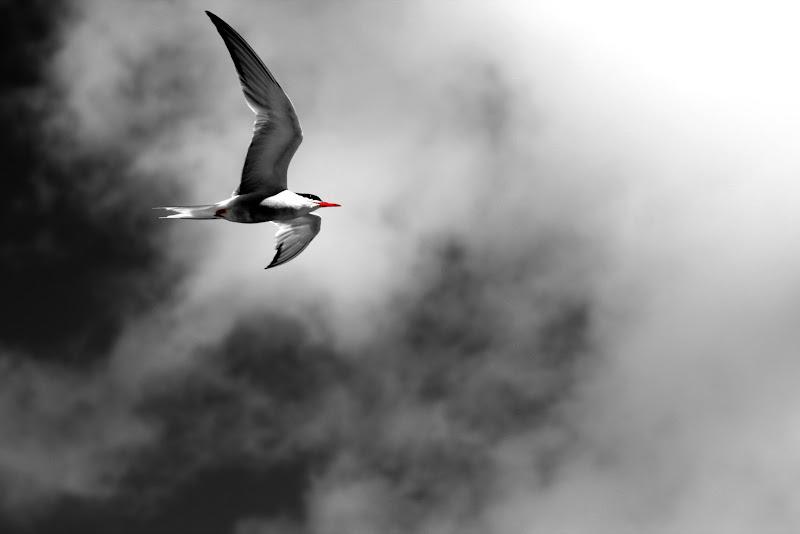 Chiudi gli occhi e vola tra le note del vento di lukich