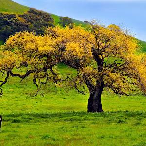 Spring Oak_and Kids-3815j.jpg