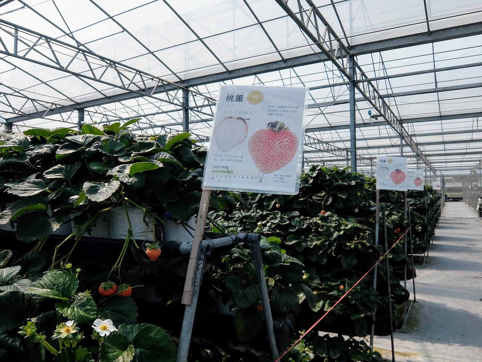 像這邊就是桃熏草莓