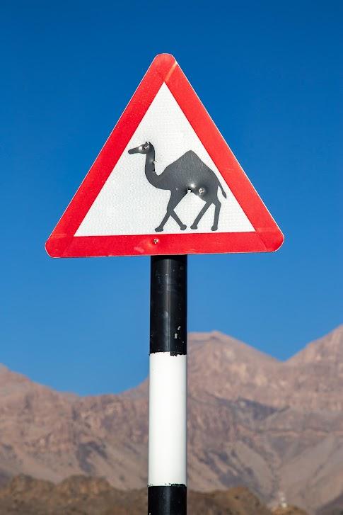 samochodem po Omanie, znak uwaga wielbłądy