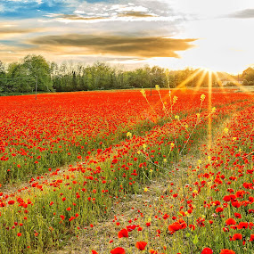 Verso il tramonto. by Pasquale Bimonte - Flowers Flowers in the Wild