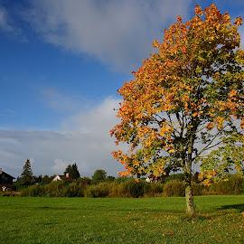 by Eugenija Seinauskiene - Nature Up Close Trees & Bushes (  )