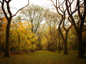 Photo: Autumn elm trees in Central Park. New York City.  View the writing that accompanies this post here at this link on Google Plus:  https://plus.google.com/108527329601014444443/posts/Udw2YCFFjg1  View more New York City photography by Vivienne Gucwa here:  http://nythroughthelens.com/