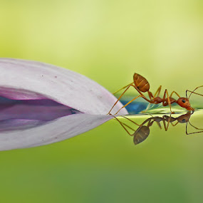 Drink by Setiady Wijaya - Animals Insects & Spiders