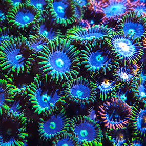 Zoanthid by Bruce Arnold - Nature Up Close Other plants