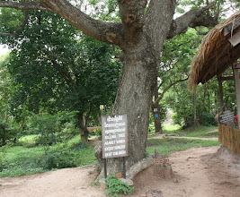 Photo: Year 2 Day 35 -  The Killing Tree