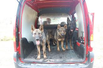 Photo: Ayla, Tasha og Varg