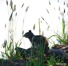 Photo: (Year 2) Day 359 -  Squirrel at Crescent City Campsite
