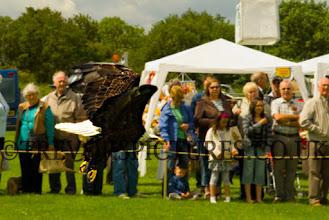Photo: FLY LIKE AN EAGLE