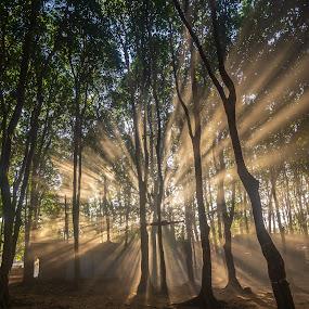 Beauty morning by Wahid Hasyim - Nature Up Close Trees & Bushes ( natural, nature, ray of light, natural light, nature up close, tree, trees, landscape,  )