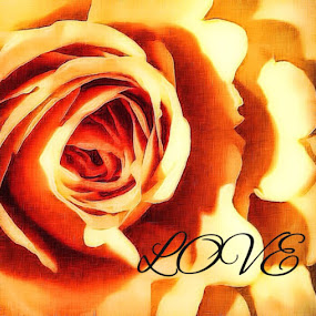 Rose love by Pamela Hammer - Typography Words ( love, rose, art, illustration, typography )