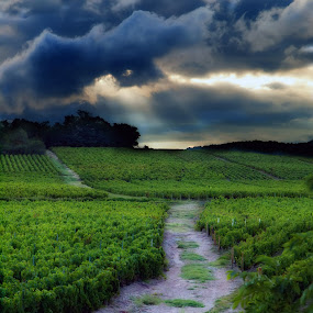 A vineyard in France by Michel Lorente - Landscapes Travel (  )