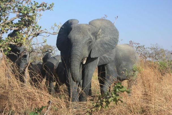 Nazinga Reserve