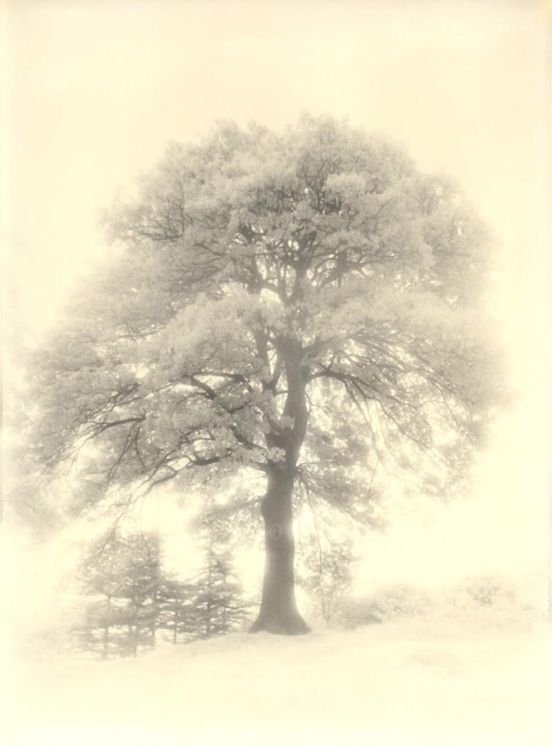 La quercia della mia infanzia e di ricordi ormai sfocati di mt antona
