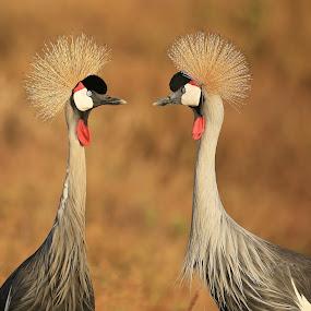 by Sudhir Nambiar - Animals Birds (  )
