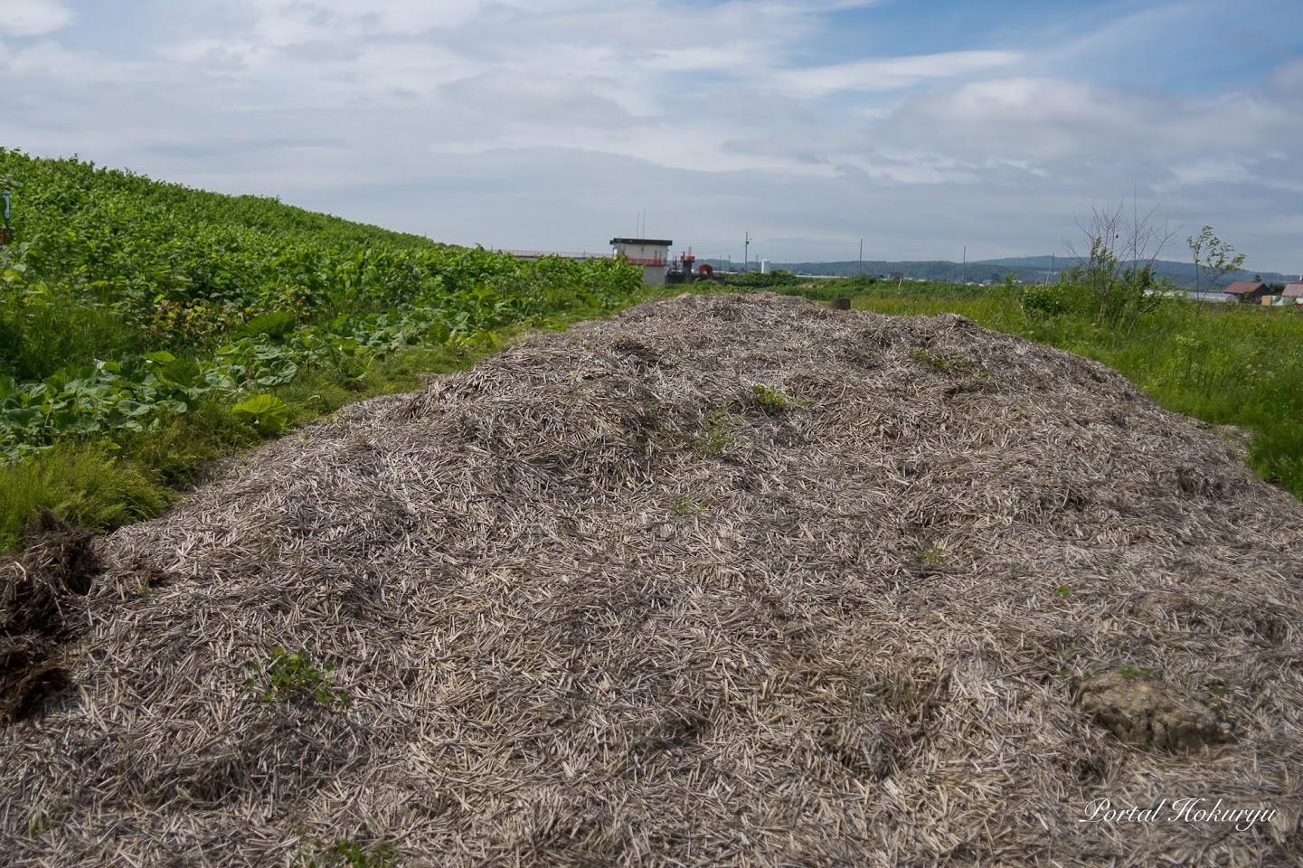 1年間熟成した稲ワラの堆肥