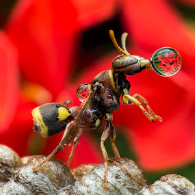 Wasp 180829A by Carrot Lim - Animals Insects & Spiders ( macro, wasp, insect,  )