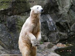 Photo: Knut will wissen, ob es noch etwas gibt ;-)