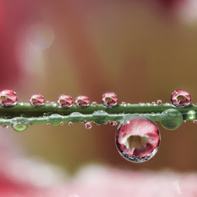 With ot without Dews... by Ahmad Soedarmawan - Nature Up Close Water
