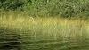 Image 5 of Ogontz Lake, Lyman