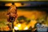 Image 3 of Tucanos Brazilian Grill, Orem