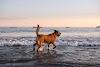 Image 4 of Rosie's Dog Beach, Long Beach