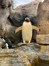 Image 6 of St. Louis Zoo, St. Louis
