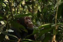Budongo Forest, Kampala, Uganda