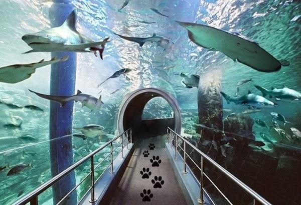 Popular tourist site SEA LIFE Melbourne Aquarium in Melbourne