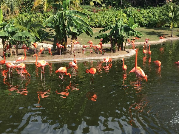 Popular tourist site Jungle Island in Miami