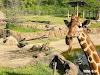 Image 3 of Dallas Zoo, Dallas