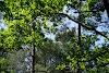 Image 8 of Etang de Cousseau Reserve Naturelle, Lacanau