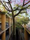 Image 2 of Roth Way Garage, Stanford