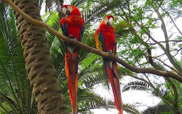 Popular tourist site Santa Fe Zoo in Medellin